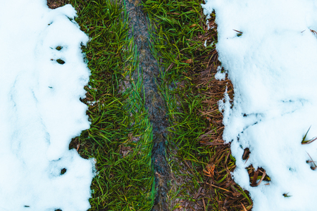 spring is coming. little stream with green grass go through white snow. nature