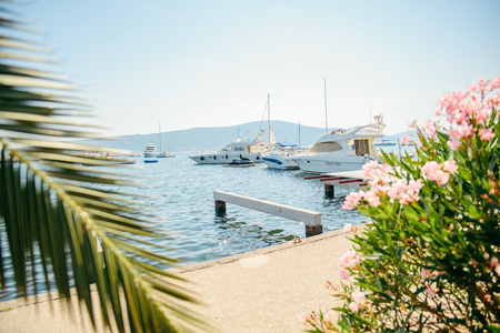 yachts in tivat bay. palms leaves on front. summer time