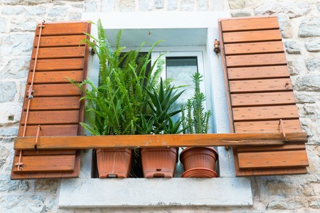 old window with shutter with plants close up. decoration