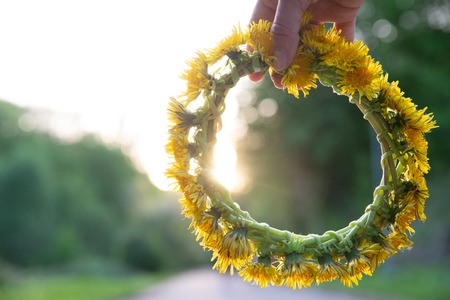 woman hand holding wreath of yellow dandelions. copy space