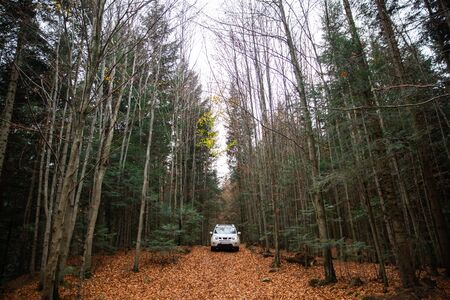 white suv car at trail road in autumn forest copy space lifestyle Foto de archivo - 130175216