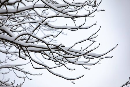 snowed tree branches winter season copy space