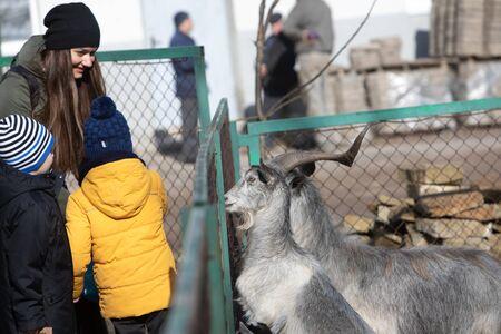 little kid feeding goat in contact zoo Stockfoto - 133479600