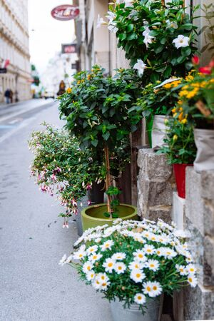 flowers in pots outdoors near shop copy space spring blooming time Standard-Bild