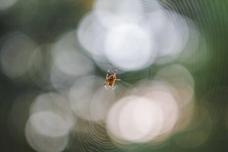 little spider on web outdoors. close up Reklamní fotografie