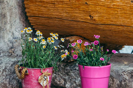 flowers in pots at back yard blooming season