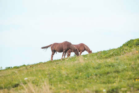 black horse eating grass at mountains field copy space