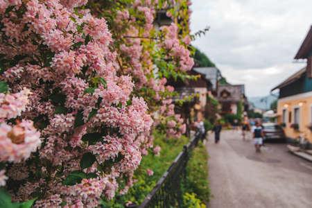 blooming flowers of bushes at hallstatt city in austria