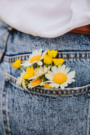 chamomile in woman back pocket Banque d'images - 151505368