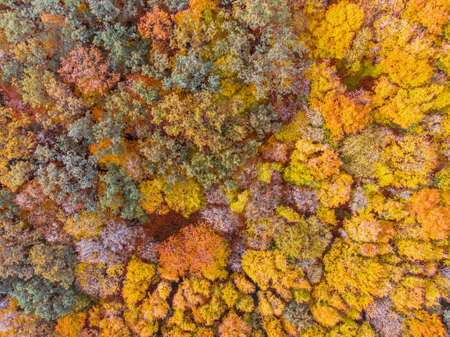 aerial view of autumn forest with yellow leaves trees Reklamní fotografie