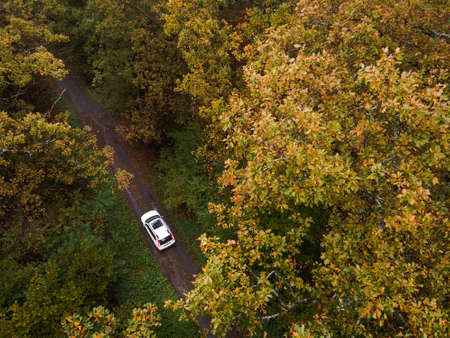 aerial view of car in autumn forest riding by trail path copy space