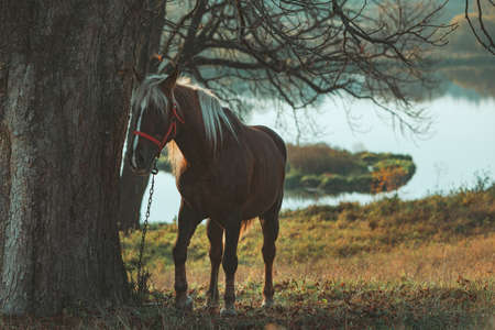 view of brown horse near tree lake on background. copy space
