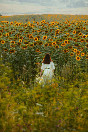 young woman in sundress walking by sunflowers field on sunset view from behind