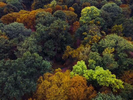 aerial view of autumn forest colorful trees