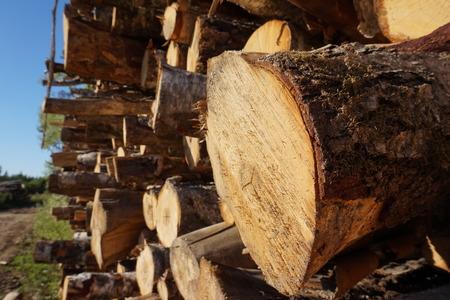 sawn: Stacked sawn logs. Stock Photo