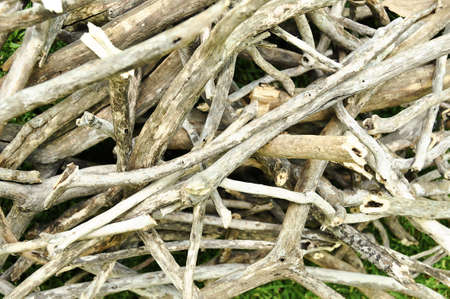 kindling: Dried firewood stacked for kindling