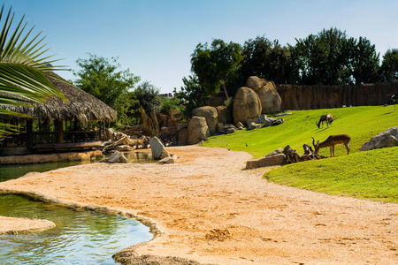Relaxing view of large aviary with animals on green grass lawn, sand and water, on a hot sunny summer day, with a rustic wooden house with straw roof in the background
