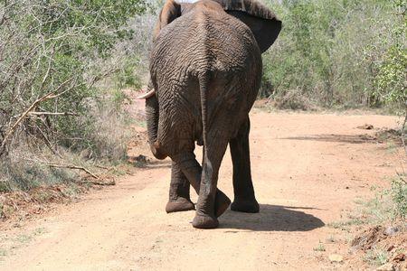 crossing legs: Elephant crossing legs