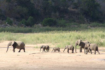 savana: Elephant  Crossing dry river Stock Photo