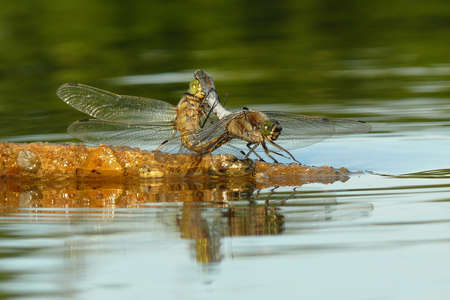 detai: Dragonfly