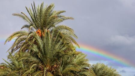 Rainbow and palm tree after storm