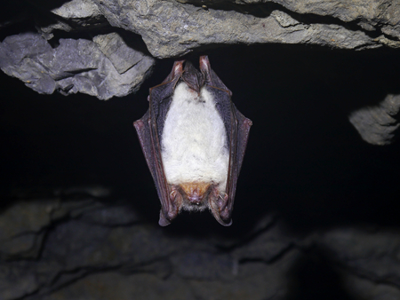 Bat in the cave