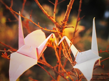 truelove: A couple of paper birds kissing each other on an old tree branch under a soft and romantic light