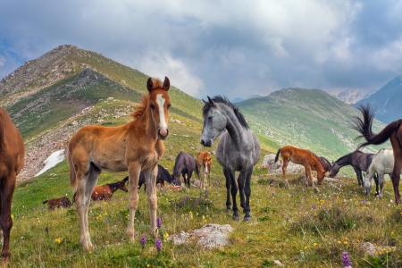 Picture of the horses that graze in the mountains of Tibet, the Himalayas. photo