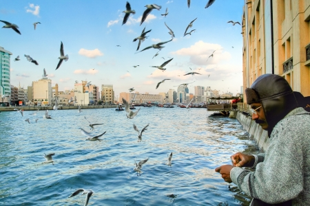 Fisherman fishing in dubai, UAE, at december. There are many birds around cutch a fish