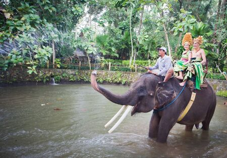 thailand: couple riding and traveling on an elephant at asia