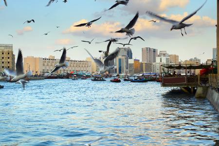 Bild, wo eine Menge von Möwen fliegen. Neben einer Menge von Booten über den Kanal. Dubai Standard-Bild - 40848729