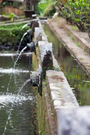 rejuvenate: fresh water drops in a cup, Bali, Indonesia