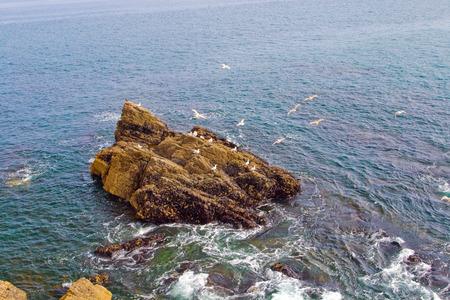 bretagne: Rock island with a few white birds of gull in ocean, Bretagne, France. Stock Photo
