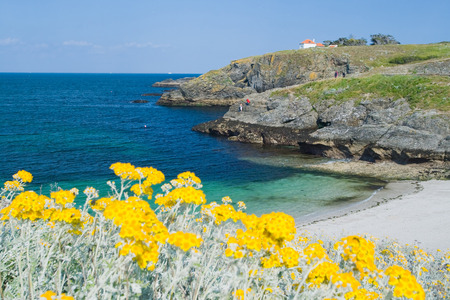 spite: The image of a wild beach with emerald waves . In the foreground of bright yellow flowers that grow in spite of the harsh climate. Island of Belle Ile en Mer, France.