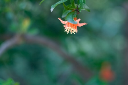 tropical climate: Flower in China, tropical climate