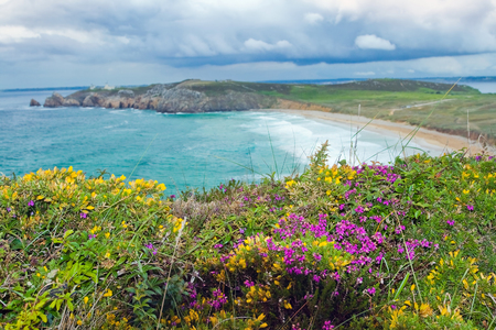 spite: The image of a wild beach with emerald waves . In the foreground of bright flowers that grow in spite of the harsh climate. Bretagne, France.