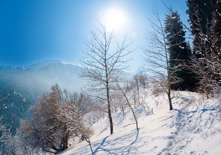 european white birch: Snowy winter in mountain