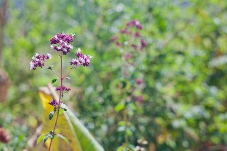 champ de fleurs: Image de fleurs des champs sur le fond vert. Banque d'images