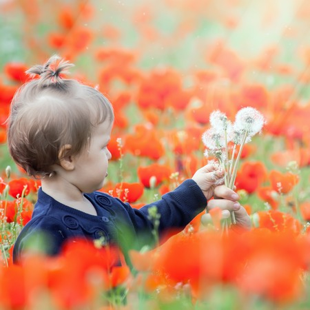hapy: Children - flowers of life. Funny child holding a flower of dandelion at outdoor poppy field. Baby girl. Spring. ?hildrens Day celebrating on first June, 1 or 14 November Stock Photo