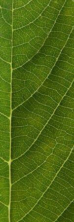 leaf, Stock Photo - 3112527