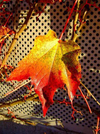 yellov: Autumn