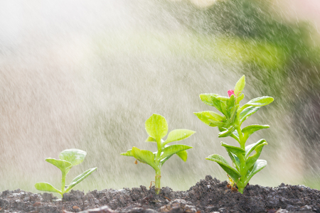 Watering small trees with water spray - save water concept Stock Photo