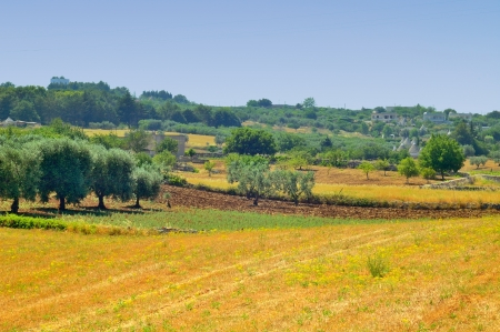 Landscape of the countryside of Martina Franca  TA