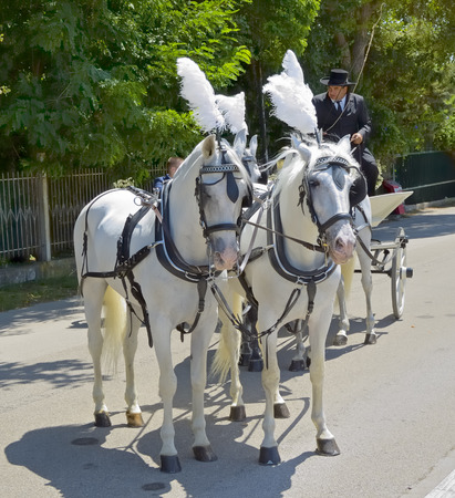 the coachman: Paestum, Italy - 08.15.2014: coachman and carriage drawn by four horses for marriage
