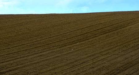 plowed field: freshly plowed field in summer, in the background the sky