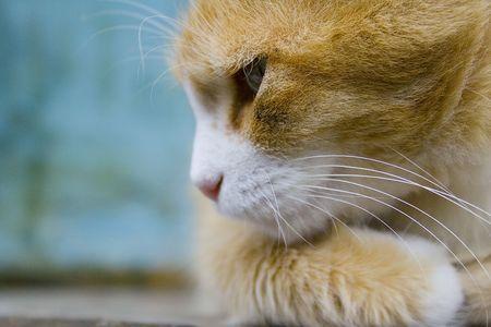 observes: A cat observes keenly Stock Photo