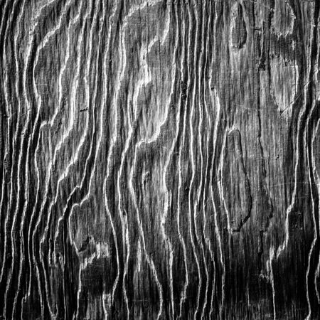 black and white artistic wood texture pattern photo