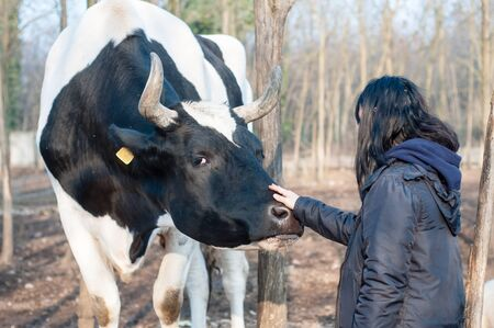 caresses: girl caresses bull on the farm in italy