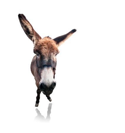 isolated funny donkey on white background photo