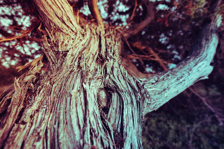 Vintage filtered close up on twisted leafless branches. Organic backdrop, texture.